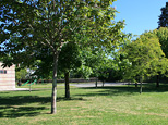 Parzellen mit Bäumen